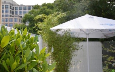 Rent-a-tree_Classic Openair_Hackeschermarkt_Pflanzenvermietung_Pflanzenverleih_Bambus