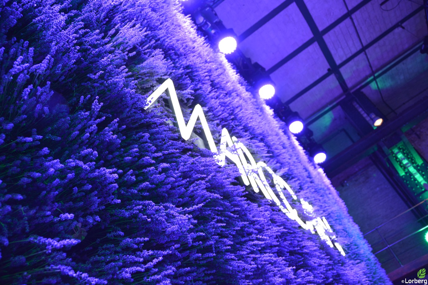 Rent-a-tree_FAshion Week_Marc Cain_Pflanzenverleih_Mietpflanzen_Lavendel_1