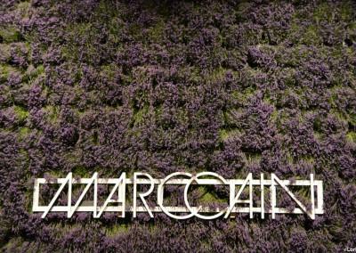 Rent-a-tree_FAshion Week_Marc Cain_Pflanzenverleih_Mietpflanzen_Lavendel_3