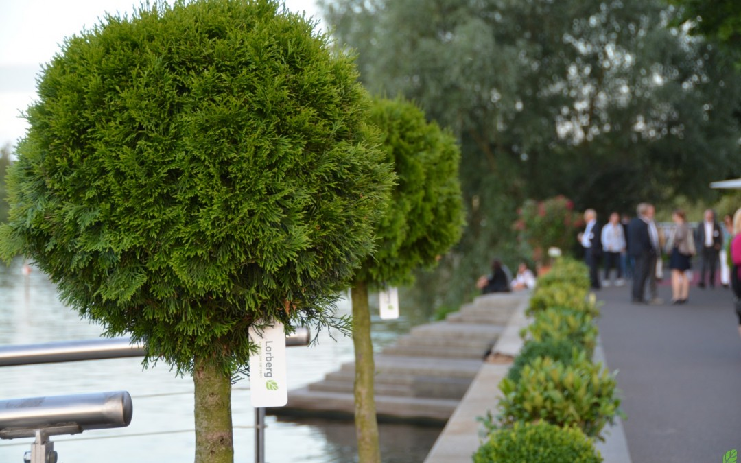 Rent-a-tree_Pflanzenverleih_Gartenfest_Kugelform_Lorberg_3